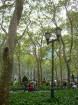 Parc aux arbres superbes.jpg